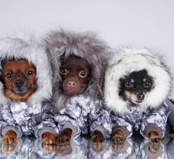 Ideas para diseñarle ropa a tu perro