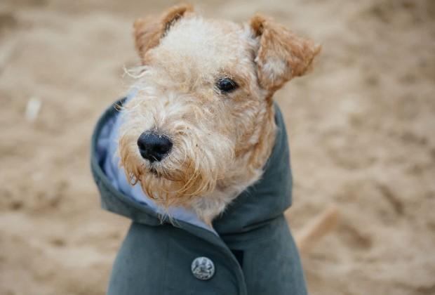 Un abrigo elegante para un canino con mucho estilo.