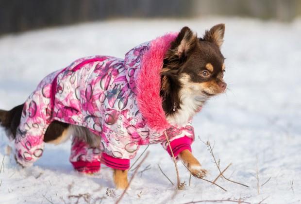 ¡Un paseo en la nieve!