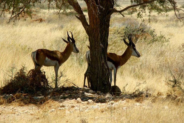 antilope galeria