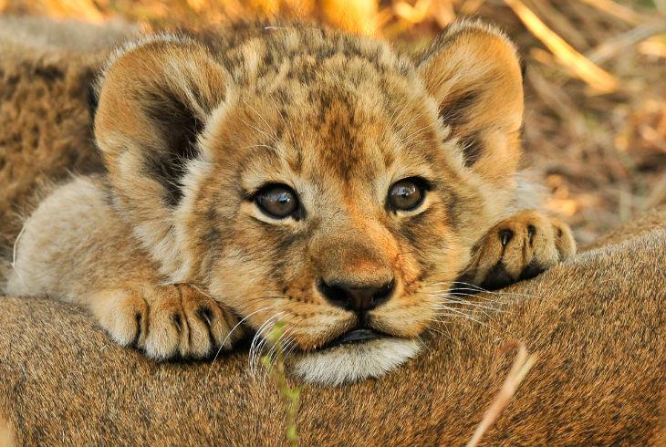 Por Qué Los Animales Bebés Nos Causan Ternura