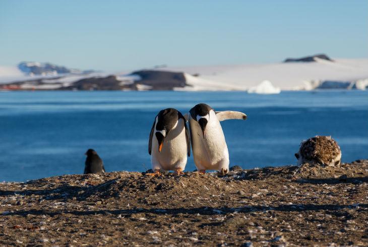 pingüinos galeria