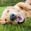 El lenguaje de los perros y su significado