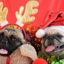 Los mejores regalos para tu perro en esta navidad
