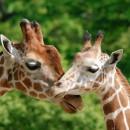 Zoológicos para visitar estas vacaciones