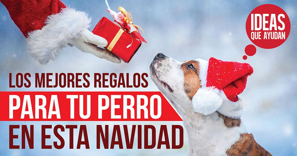 regalos para tu perro