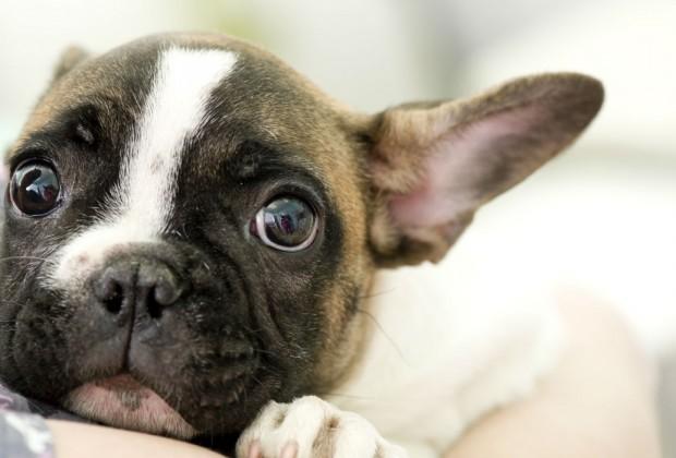 El estrés en tu perro