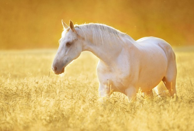 Así se comunican los caballos