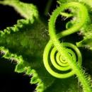 plantas musica chica