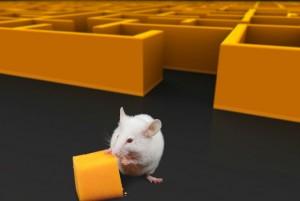 Ratón al salir de un laberinto