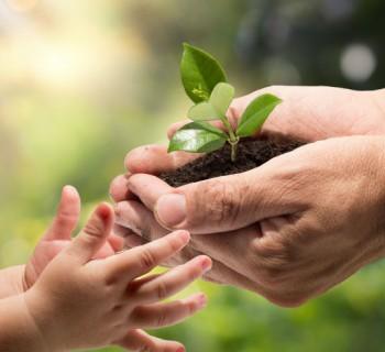 Plantas que puedes sembrar en casa