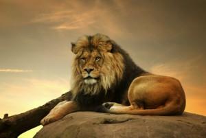 ¿Quieres ser tu propio rey?