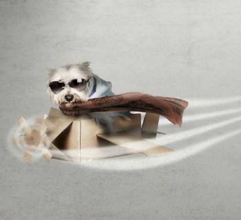 avión-perro
