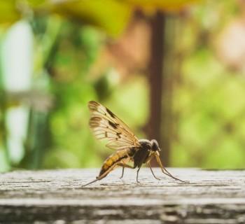 mosquito2 chica