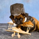 perro-avión