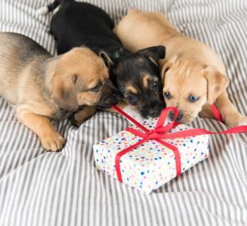 perro-regalo chica