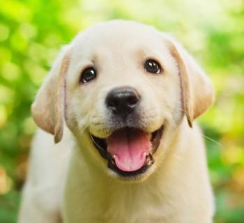 puppy chica