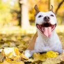 7 perritos antes y después de ser adoptados