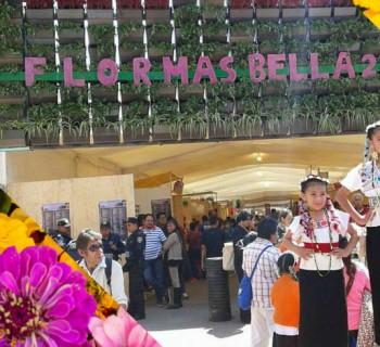 La Flor Más Bella del Ejido en el mercado de las flores