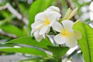 Algunas plantas aromáticas para tu hogar
