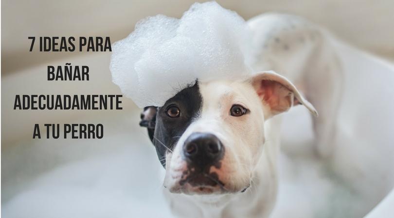 7 ideas para bañar adecuadamente a tu perro