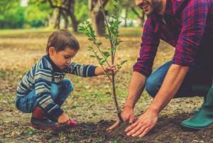 Enséñale a tu hijo a plantar un árbol