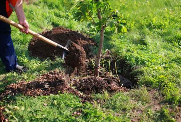 Cuidar a la Madre Tierra es tener salud