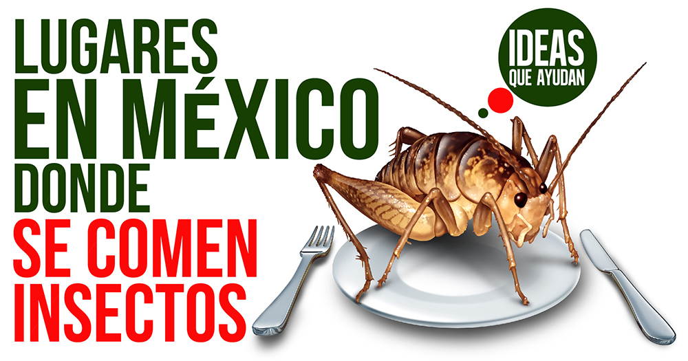 lugares en México donde se comen insectos