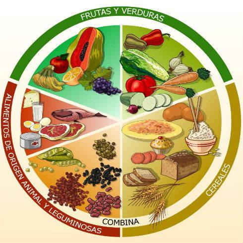 Ejemplo De Diagrama Del Plato Del Buen Comer Collection