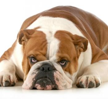 Cosas que odia tu perro
