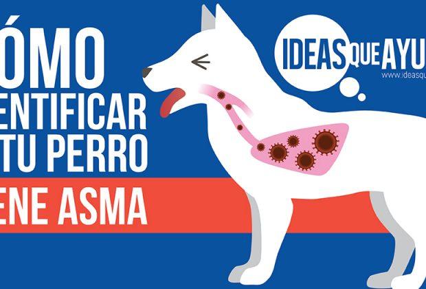 perro tiene asma