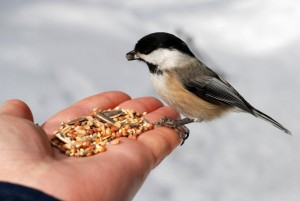 ¡Come como pajarito! Come semillas