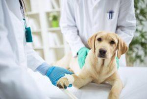 Qué hago si veo un perro atropellado ¿quién me puede ayudar?