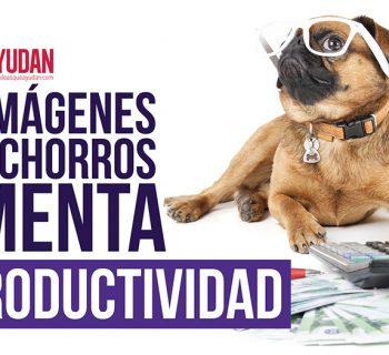 imágenes de cachorros