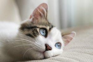 ¿Qué tan hábil eres? ¿El gato sube o baja por las escaleras?