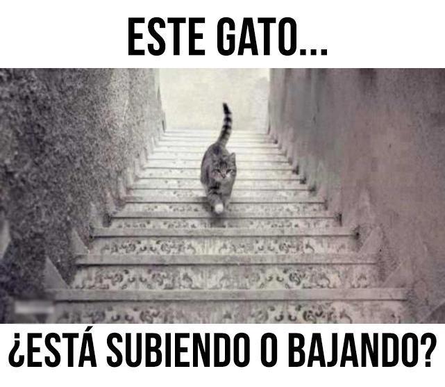 05-jul-2016_gato_subiendo o bajando