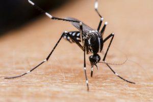 Remedios para aliviar las molestias por los piquetes de mosquito