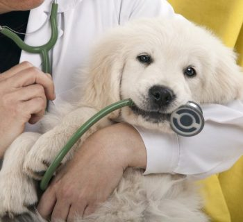 Veterinario te dice lo que debes saber al ayudar a un animalito