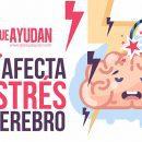 Cómo afecta el estrés a tu cerebro