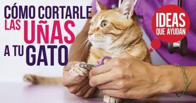 Cómo cortarle las uñas a tu gato