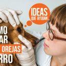 cómo cuidar los ojos y orejas de tu perro