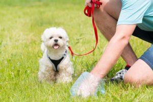 heces_perro