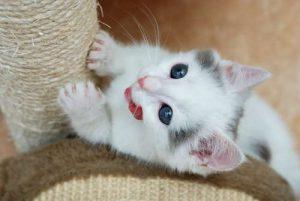 rascador_unas_gato