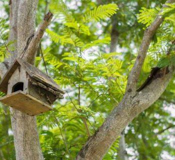 Ideas para hacer comederos caseros para aves