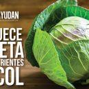 nutrientes de la col