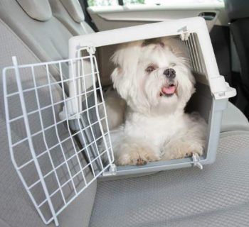 Consejos para viajar en auto con tu mascota