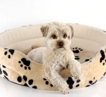 cama_para_perros