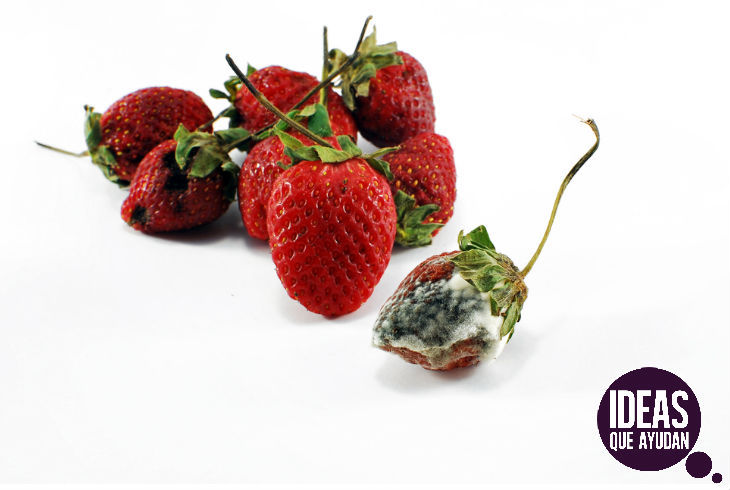 La fruta podrida puede contener bacterias y toxinas.