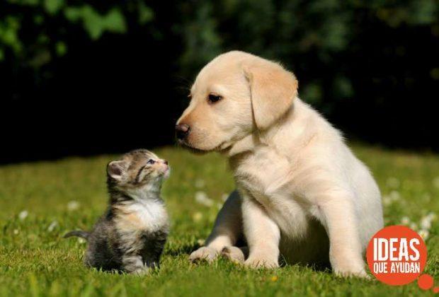 Cuál es la mejor mascota para tu hijo ¿perro o gato?