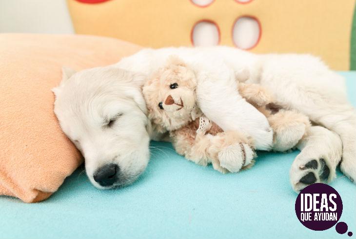 ¿Con qué sueñan los perros?
